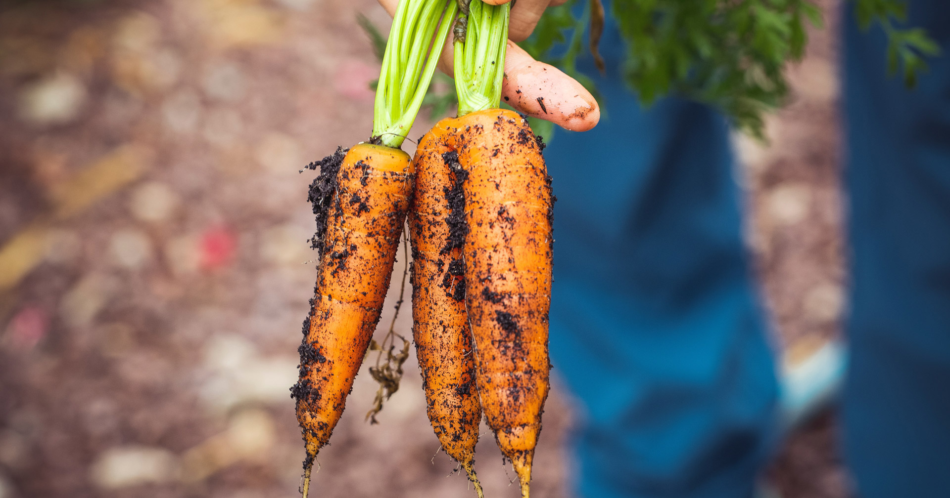 Meet The Maker: Growing Carrots (EatWell Magazine)